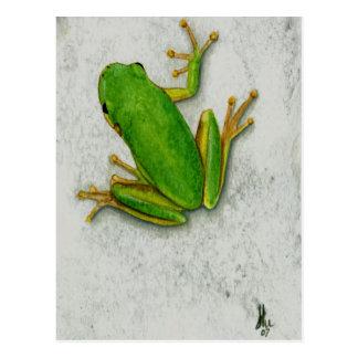 Carte postale de grenouille verte