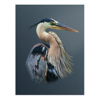 Carte postale de héron de grand bleu