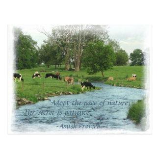 Carte postale de Lancaster Amish ! Proverbe amish