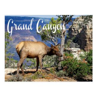 Carte postale de l'Arizona de parc national de