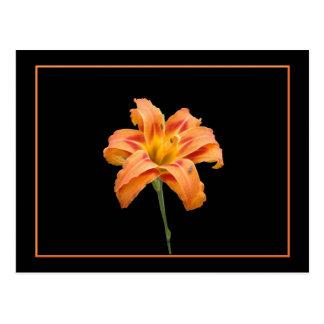 Carte postale de Lilly d'orange sauvage