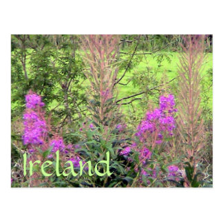 Carte postale de l'Irlande Heather