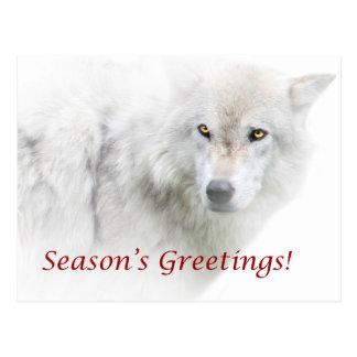 Carte postale de loup blanc de Bonnes Fêtes