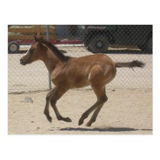 Carte postale de Mustang-Esprit