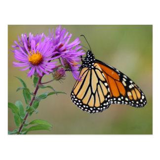 Carte postale de papillon
