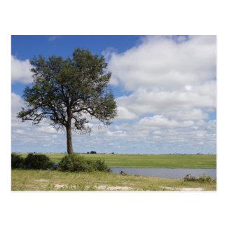 Carte postale de paysage du Botswana