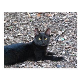 Carte postale de photo de chat noir