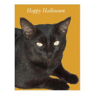 Carte postale de photo de chat noir de Halloween