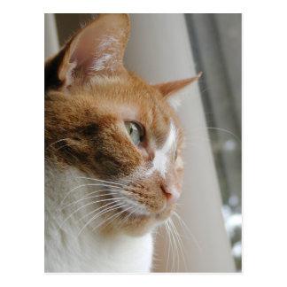 Carte postale de plan rapproché de chat de