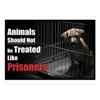 Carte postale de prisonniers d'animal pas