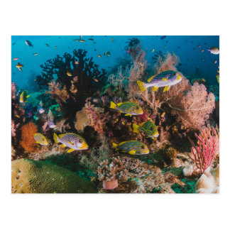 Carte postale de récif coralien