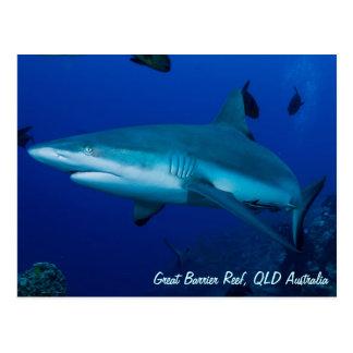 Carte postale de requin de récif