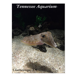 Carte postale de seiches d'aquarium du Tennessee