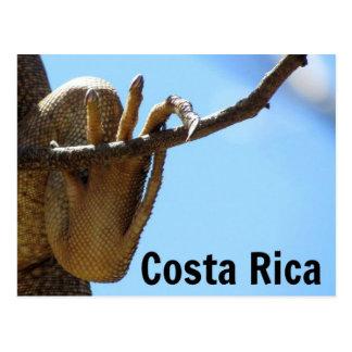 Carte postale de souvenir d'iguane du Costa Rica