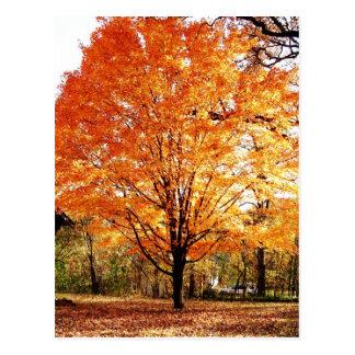 Carte postale de thanksgiving de feuille d'automne carte postale