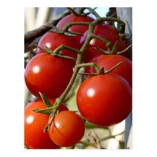 Carte postale de tomates
