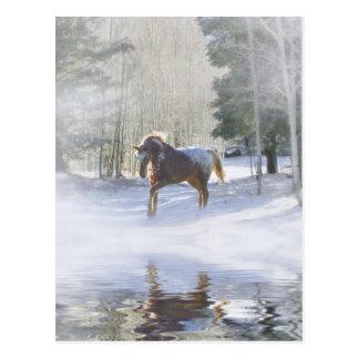 Carte postale de vacances de cheval