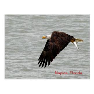 Carte postale d'Eagle chauve