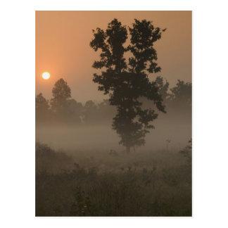 Carte Postale Début de la matinée, Soleil Levant et brouillard