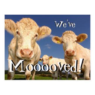 Carte Postale Des vaches drôles nous avons déplacé la nouvelle