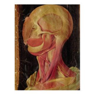 Carte Postale Dessin anatomique de la tête humaine