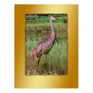 Carte postale d'oiseau de grue de Sandhill
