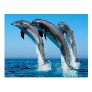 Carte Postale Dophins jumping