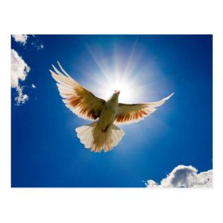 Carte Postale Dove dans the sun