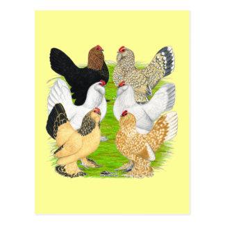 Carte Postale D'Uccles six poules