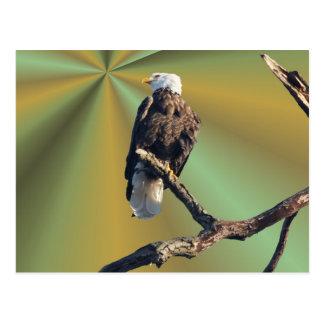 Carte Postale Eagle chauve avec des rayons de la terre