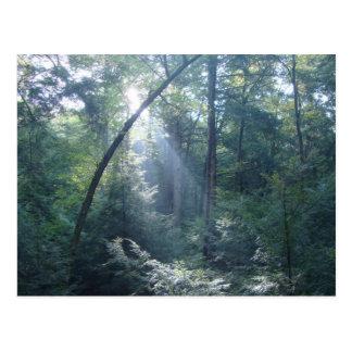 Carte Postale Éclat de forêt