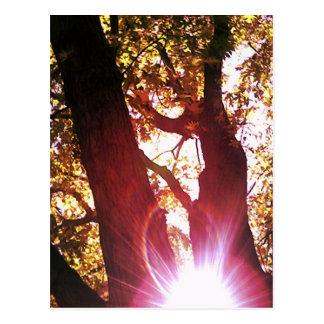 Carte Postale Éclat rouge de Sun