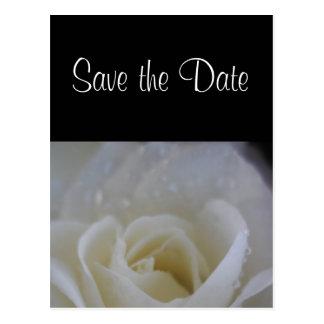 Carte Postale Économies de rose d'ange le faire-part de mariage