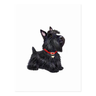 Carte Postale Écossais Terrier (a) - (par JBF)