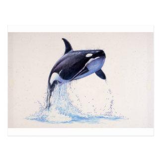 Carte Postale Écoulement d'orque