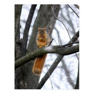 Carte Postale Écureuil brumeux de matin