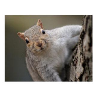 Carte Postale Écureuil curieux