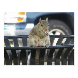 Carte Postale Écureuil de poubelle