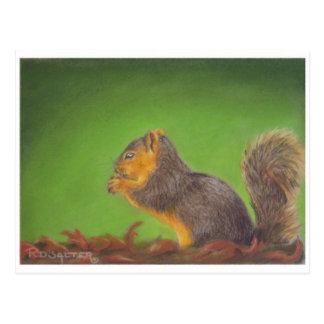 Carte Postale Écureuil rouge
