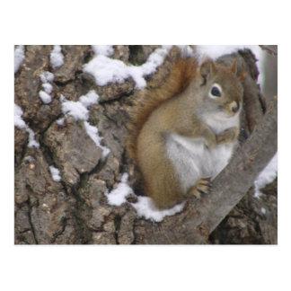 Carte Postale Écureuil rouge d'hiver