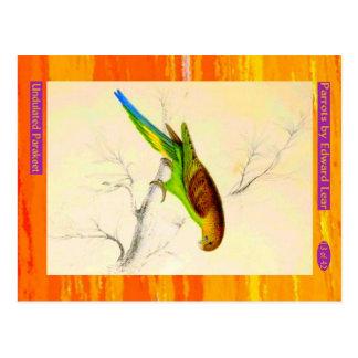 Carte Postale Edward Lear. Parakeet. ondulé