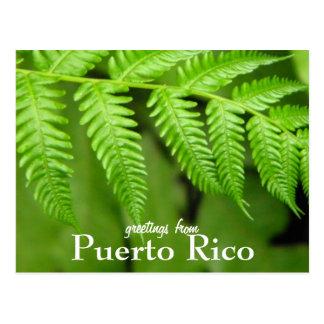 Carte Postale EL Yunque, Porto Rico