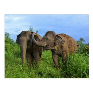 Carte Postale Éléphants asiatiques