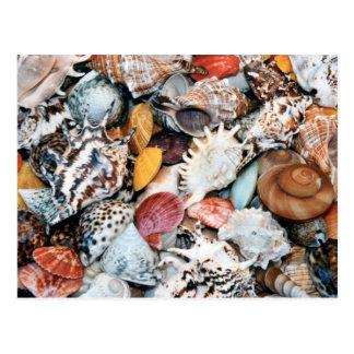 Carte Postale Elle vend des coquilles de mer