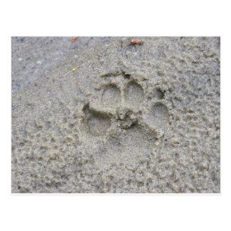 Carte Postale Empreinte de patte dans le sable