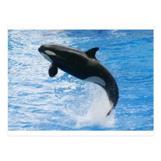 Carte Postale Épaulard d'orque