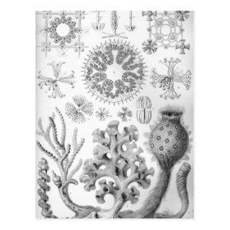 Carte Postale Éponges d'Ernst Haeckel Hexactinellae