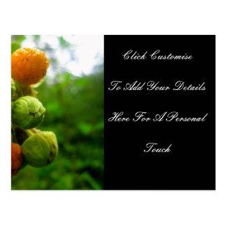 Carte Postale Épouser de bourgeons de Bush