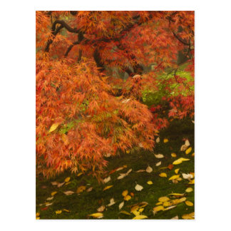 Carte Postale Érable japonais dans la couleur 2 de chute