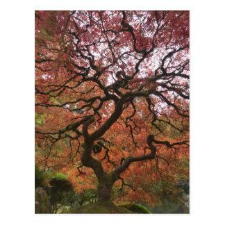 Carte Postale Érable japonais dans la couleur 5 de chute